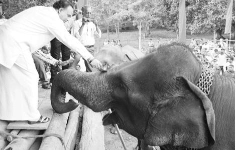 Sri Lanka's Tourism Minister anoints elephants at Pinnawala orphanage