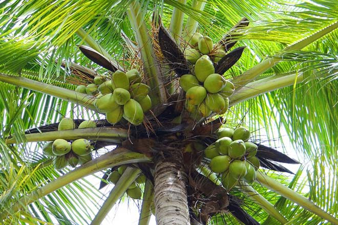 Sri Lanka to import 40,000MT of edible oil, Reduce levy on coconut oil
