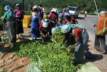 Sri Lanka tea export volumes down in April, revenue up