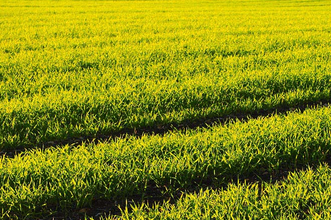 Sri Lanka's NITF gets reinsurance cover for agriculture