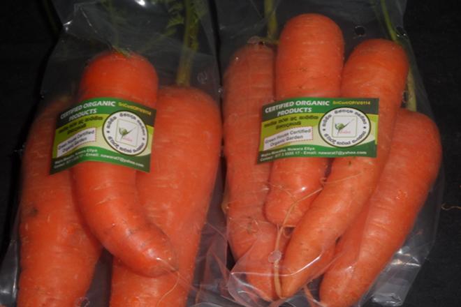 organic carrots vegetables farming