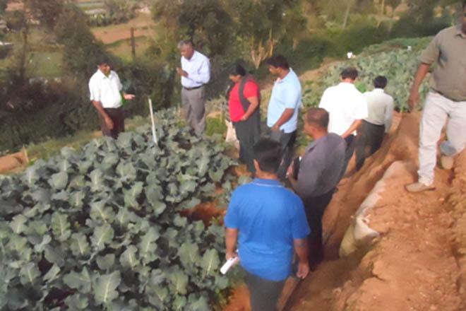 organic farming for export sri lanka