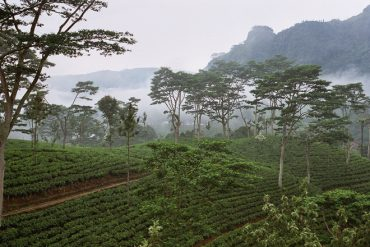 Weather to impact Sri Lanka's tea output in 2016: report