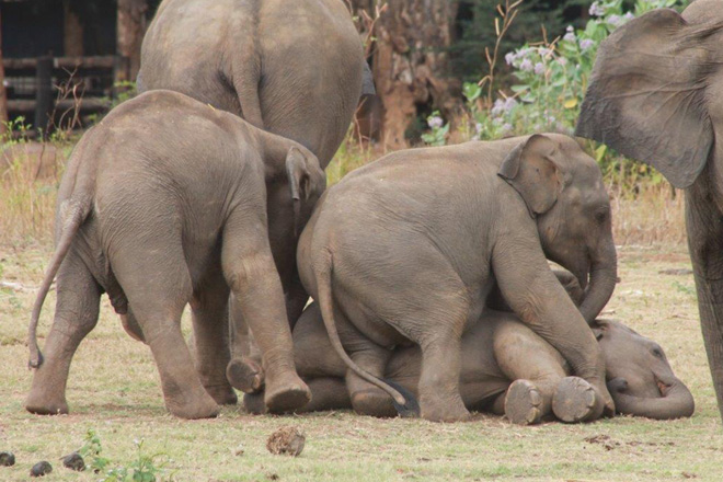 Hemas & Wild life Dept. launches website for Udawalawe Elephant Transit Home
