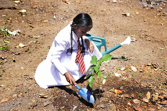 School gardens promoted by FAO and Sri Lanka's education ministry