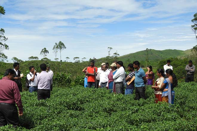 World Soil Day observed in Sri Lanka's central highlands