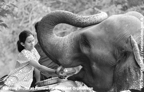 Sri Lanka's open air zoo opens doors to public; entrance free from today to 01 May