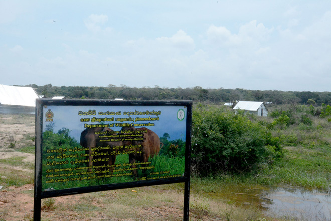 Stop deforestation and land allocation around Wilpattu national park: President