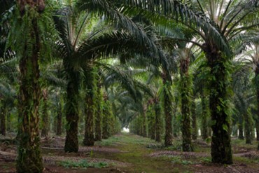 Palm Oil imports completely banned with immediate effect