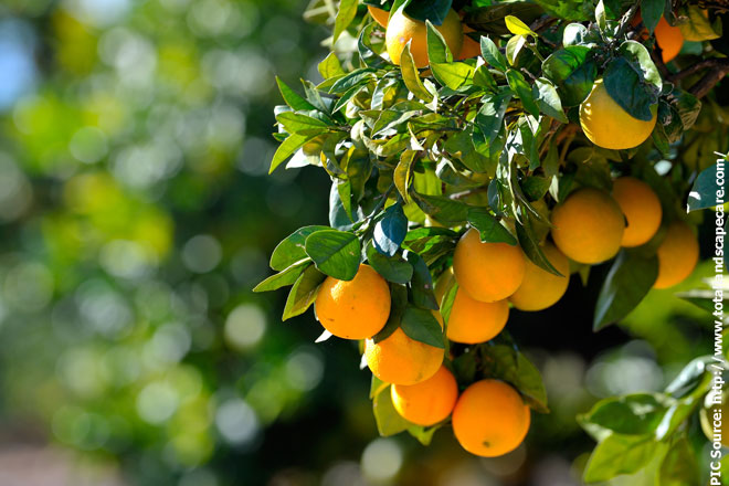 Sri Lanka to obtain arid climate resistant fruit species from Egypt