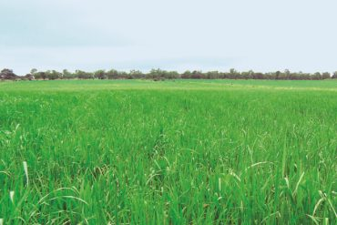 Policy on use of organic fertilizer has not changed, government emphasizes