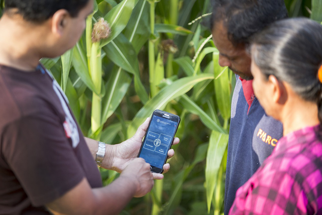 Global initiative by FAO to control Fall Armyworm; mobile app to launch in local languages