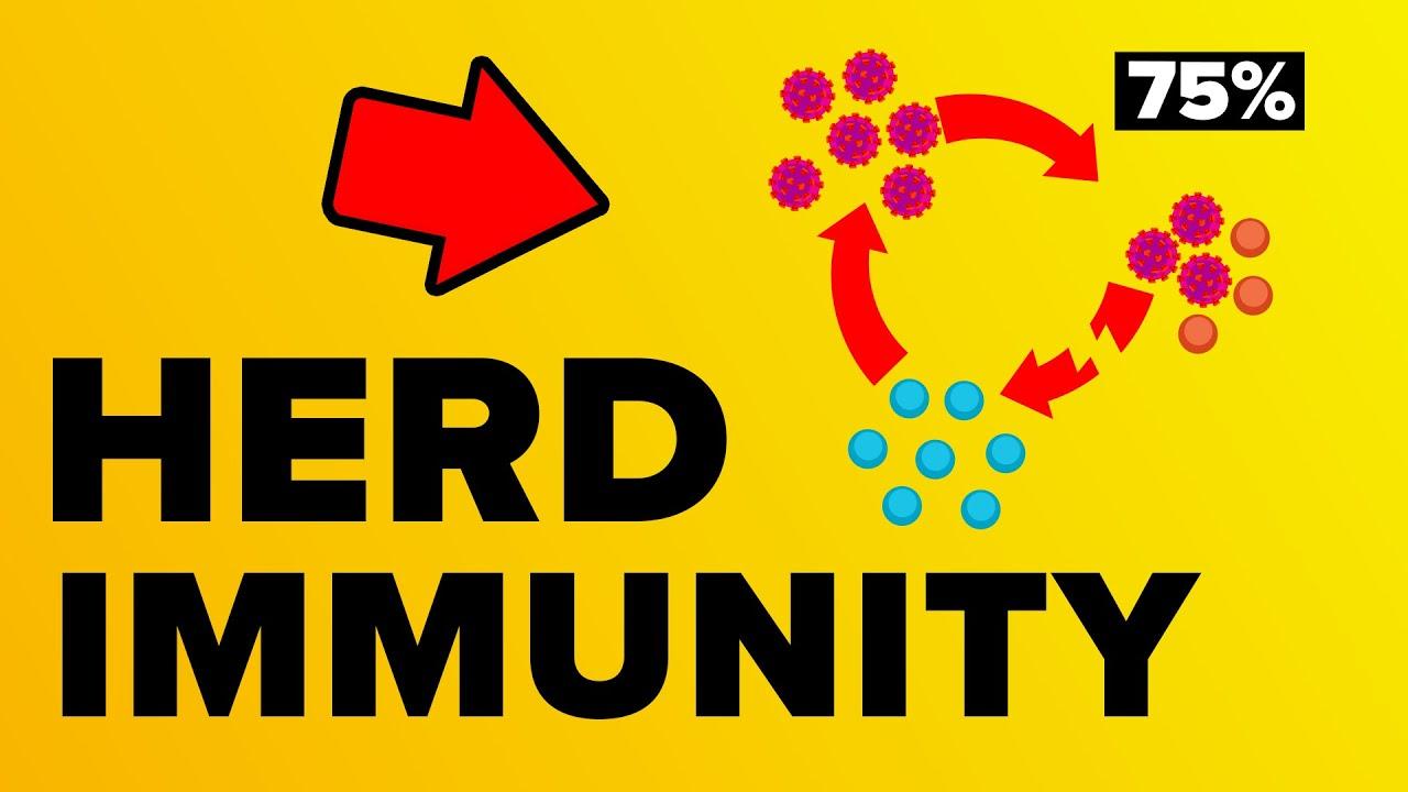VIDEO: Coronavirus Herd Immunity – Explained