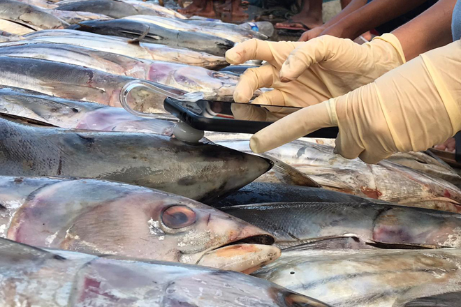 GoMicro seals commercial contract with Keells Supermarkets to assess tuna quality with AI