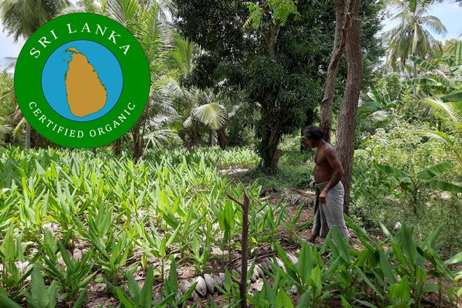 Export Development Board Supports Farmers & Processors to obtain SL Organic Certification